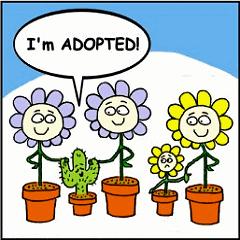 Adopted_240s_22xgif_medium